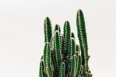 Free Close-Up Photography Of Cactus Stock Photography - 115423212