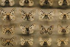 Free Brown Moth Lot Royalty Free Stock Image - 115423226