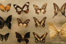 Free Photo Of Assorted Butterflies Royalty Free Stock Photos - 115423228