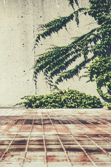 Free Vines On A Concrete Wall Stock Photography - 115423302