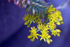 Free Yellow Succulent Flowers Selective-focus Photography Stock Photography - 115423382