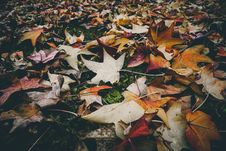 Free Withered Leaves On The Ground Royalty Free Stock Photo - 115423425