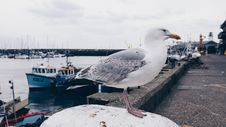 Free Photo Of White And Gray Seagull Bird Stock Photo - 115423550