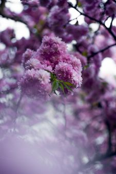 Free Closeup Photography Purple Clustered Flowers Stock Photos - 115423583