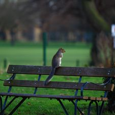 Free Brown Squirrel On Brown Wooden Bench Royalty Free Stock Photography - 115423607