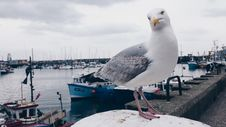 Free White And Gray Gull On White Surface Under White Cloudy Sky At Daytime Royalty Free Stock Photos - 115423638