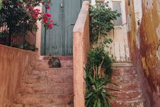 Free Brown Tabby Cat On Brown Stairway With Pink Bougainvillea Royalty Free Stock Photo - 115423705