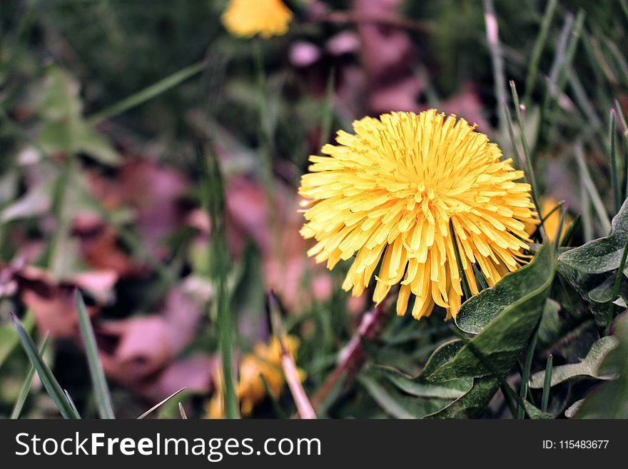 Yellow Clustered Petal Flower