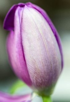 Free Selective Focus Photography Of Purple Petaled Flower Stock Photo - 115550100