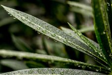 Free Close-up Photography Of Leaves With Water Droplet Stock Photography - 115550172