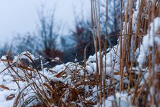 Free Close-Up Photography Of Dry Grass Covered With Snow Royalty Free Stock Photo - 115550175
