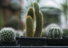 Free Close-Up Photography Of Cactus Stock Images - 115550244