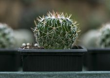 Free Close-Up Photography Of Cactus Royalty Free Stock Photos - 115550248