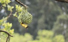 Free Close-Up Photography Of Bird Stock Photo - 115550250