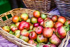 Free Photo Of Red And Green Apples Royalty Free Stock Photography - 115550297