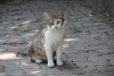 Free White And Brown Cat Sitting On Ground Royalty Free Stock Photo - 115550325
