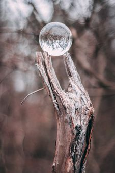 Free Round Clear Glass Ball On Gray Tree Branch Stock Photos - 115550373