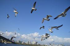 Free Flock Of Birds Flying Stock Image - 115550411