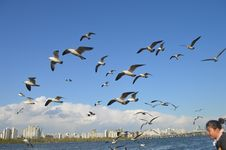 Free Flock Of Birds Flying Over Body Of Water Royalty Free Stock Photo - 115550415