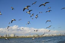 Free Flock Of Seagulls Flying Over Sea Stock Images - 115550424