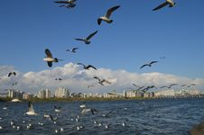 Free Flock Of White Birds Flying Royalty Free Stock Photography - 115550427