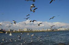 Free Birds Royalty Free Stock Photos - 115550428