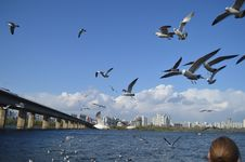 Free Flock Of Seagulls Stock Images - 115550434