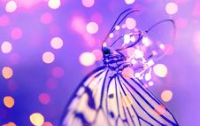Free Macro Photography Of Butterfly Near Lights Stock Image - 115628171