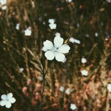 Free White Petaled Flower In Closeup Photo Royalty Free Stock Photography - 115628177
