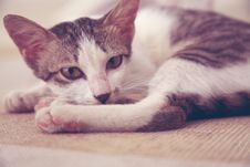 Free Tabby Cat Lying On Bed Stock Images - 115628234