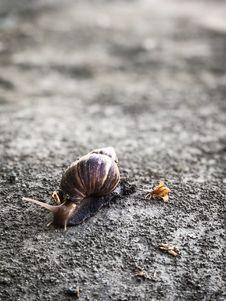 Free Close-Up Photography Of Snail Stock Photos - 115628273