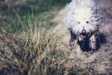 Free Photography Of Dog In The Field Stock Images - 115628324
