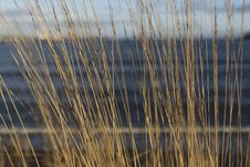 Free Close-up Photography Of Brown Grass At Daytime Stock Photo - 115694130