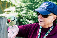 Free Woman Wearing Maroon Sweater And Blue Cap Raising Her Right Hand While Rose-ringed Parrot Perching On It Stock Photo - 115694160