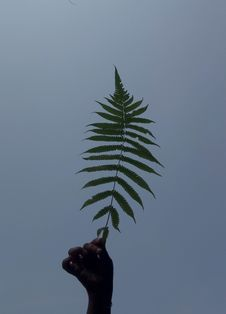 Free Person S Hand Holding Green Leaf Fern Royalty Free Stock Photo - 115694165