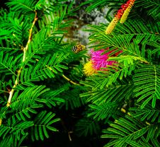 Free Fern Plant Stock Images - 115694334