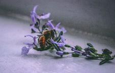 Free Bee On Purple Flower Stock Image - 115773661