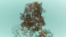 Free Low Angle Photo Of Tree Under Cloudless Sky Royalty Free Stock Photo - 115773685