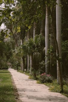 Free Palm Trees Beside Gray Paved Pathway Royalty Free Stock Images - 115773709