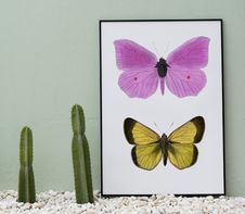 Free Pink And Yellow Butterflies Painting Beside Two Green Cacti Royalty Free Stock Photos - 115773798