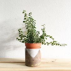 Free Green Leafy Plant Potted On Clay Pot Royalty Free Stock Photography - 115773967