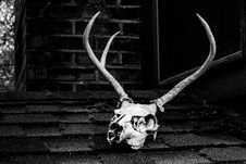 Free Grayscale Photo Of Skull With Antler Stock Image - 115773971