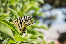 Free Brown And Black Butterfly In Macro Photography Royalty Free Stock Photography - 115774047