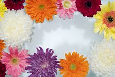 Free African, Daisy, Attractive Stock Images - 115782394