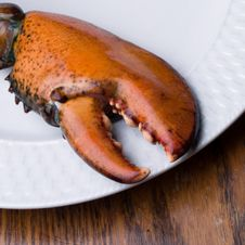 Free Lobster Claw Royalty Free Stock Image - 11581036