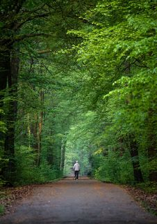 Free Green, Nature, Woodland, Forest Stock Photos - 115806363