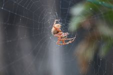 Free Spider, Arachnid, Invertebrate, Spider Web Stock Images - 115806874