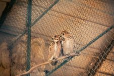 Free Two Brown Owls Stock Photo - 115844070