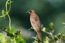 Free Closeup Photography Of Brown And Grey Bird Perched On Leaf Plant Royalty Free Stock Photo - 115844195
