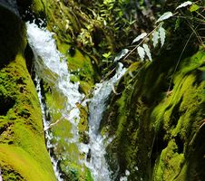 Free Water Flowing Surrounded With Plants Royalty Free Stock Image - 115844256